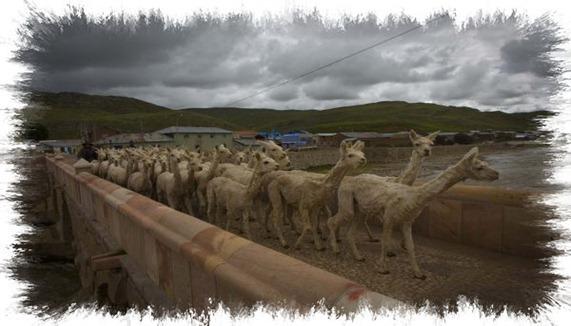 Arequipa intenso frío mata al 4% de camélidos