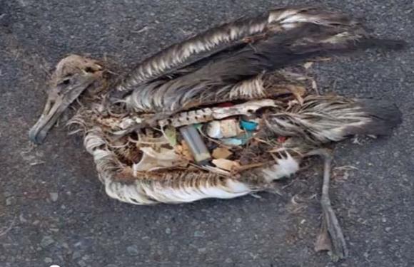 basura_océano_plastico