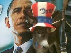 El burro de Obama