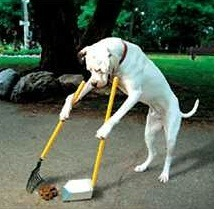 perro-barre-caca