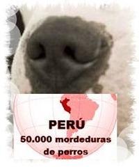 Unos 50 mil accidentes por mordedura canina ocurren anualmente en Perú