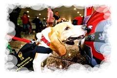 beagle Nannan