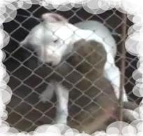 ZOO DE TACUAREMBÓ: Amistad entre perra y monita huérfana