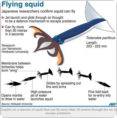 Calamares volando