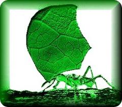 hormiga-cortadora-de-hojas