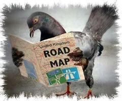 Resuelven 'triángulo de las Bermudas' de palomas de Nueva York