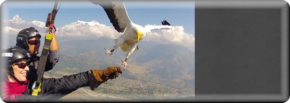 parahawking2