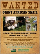 Giant_African_Snail_poster