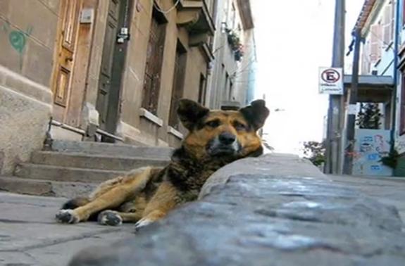 stray_dog_-_quito
