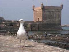 Essaouira 4