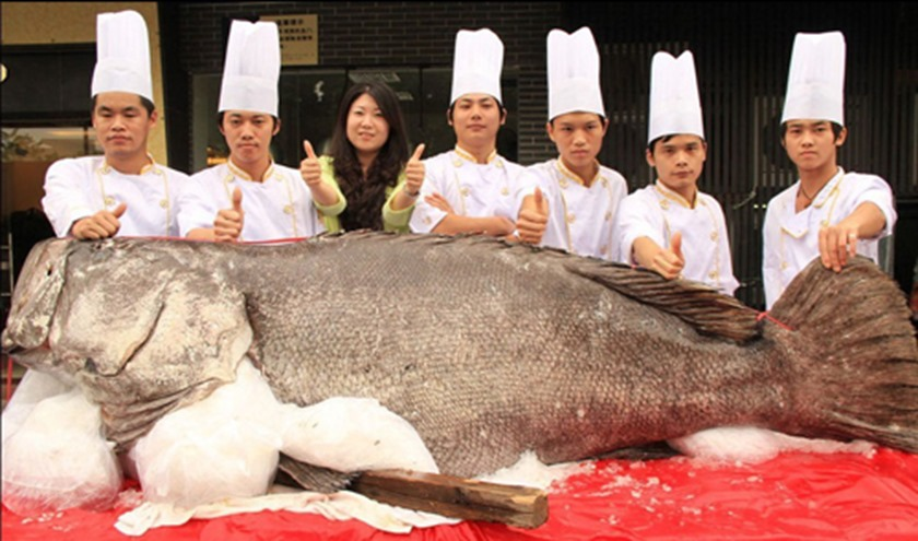 Giant grouper in Dongguan, Guangdong province
