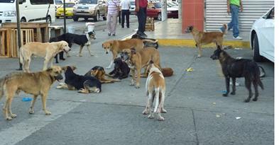 LA_CHORRERA_-_Foto_Erika_Garrido_-_La_Estrella