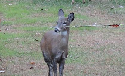 ciervo--flecha