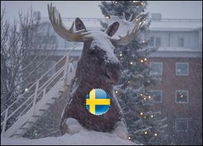 Älg-_Stadsparken_Luleå