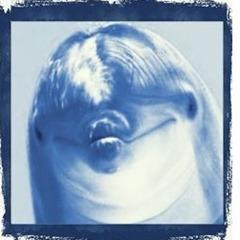 delfín)