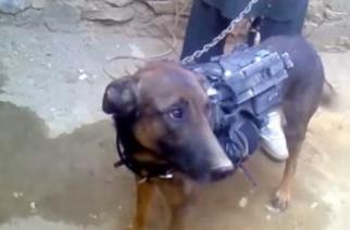 Talibanes secuestran al perro 'Colonel' del Ejército de EE.UU.