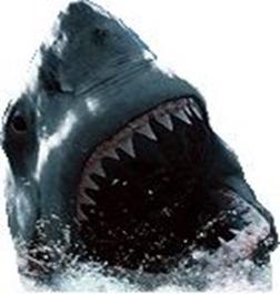 tiburón-2