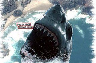 Tiburón mata a turista austríaco en Second Beach en Port St. Johns (Sudáfrica)
