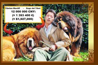 Vendido en China Dogo del Tíbet por casi 1,4 millones de euros