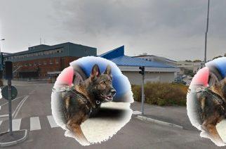 Perros detectores de drogas obtienen empleo en la Volvo