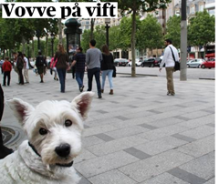 Vovve_på_vift