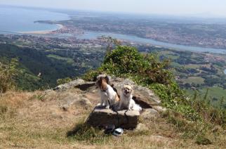 Tu perro necesita también vacaciones – de ti