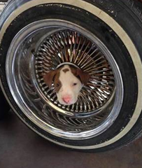 California_Firefighters_Rescue_Puppy_Stuck_in_The_Middle_of_...