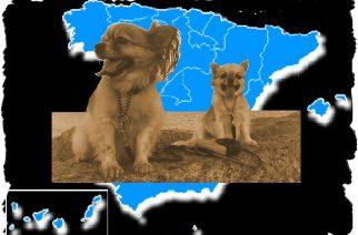 Playas para ir con perros en España