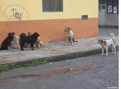 perros callejeros   ec