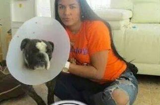 Magia Alejandra, La antioqueña que salva y protege a los perros raza bulldog