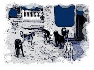 perros-callejeros Panamá