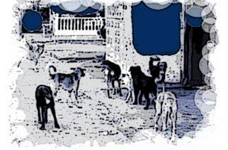 Panamá: Perros y gatos se adueñan de la ciudad