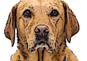 Los perros que pueden prevenir graves enfermedades