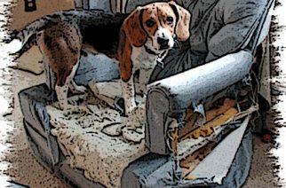 ¿Qué pasa cuando dejas a tu perro solo en casa?