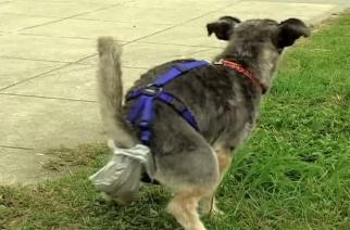 No os quejéis – ved caca de perro como abono