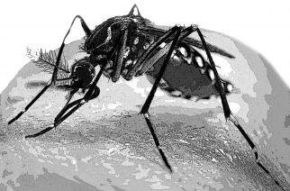 Chikunguña en Colombia: casos se multiplicaron 14 veces en 5 meses