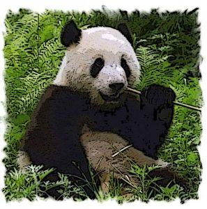 Giant-Panda-Bamboo.jpg1