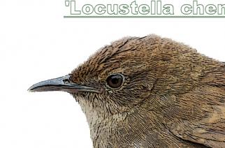 Descubierta en China una nueva especie de pájaro