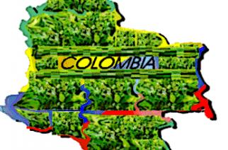 El cultivo de coca aumenta drásticamente en Colombia