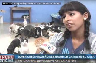 """Emperatriz Inga, """"Lizita"""", abrió albergue de gatos en su casa en Lima"""