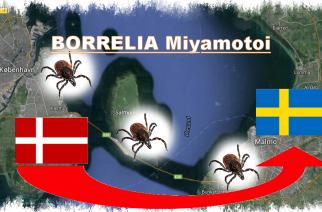 Borrelia MIYAMOTOI puede haber llegado ya a Suecia