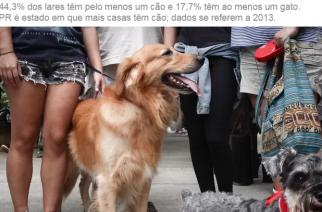 Lares brasileiros têm mais cães do que crianças
