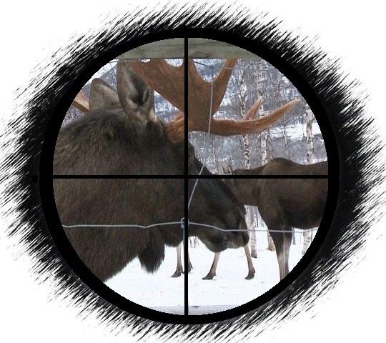 älgar polar park33.--