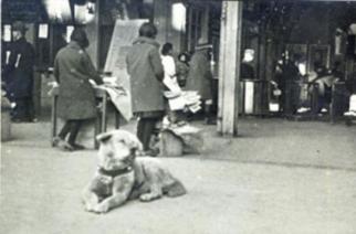 Publican inédita foto de Hachiko guardada por más de 80 años