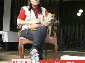 ¿Hospital para perros callejeros? Será una realidad en Costa Rica