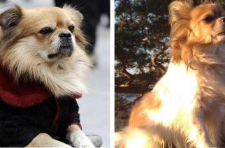 Wang Cai, el perro que espera a su dueña hace 4 años