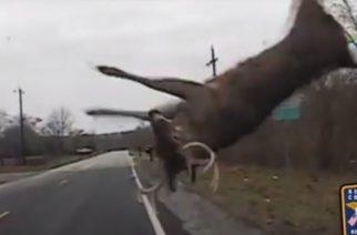 Cámara policial captura espectacular choque con un ciervo en Kentucky