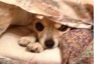 Ruido de 'bombetas' se triplica en el oído de perros y gatos