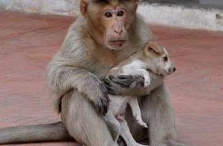 Mono adopta cachorro y lo defiende de otros perros callejeros