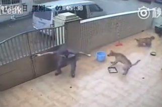 Violento robo de 2 perros para ser vendidos como carne en China